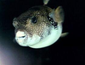 Prettyfish-refilm