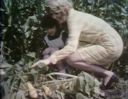 Gardenfilm