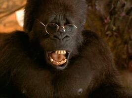 Ape named ape