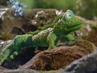 JHH-Iguana