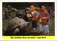 1992 sesame trading cards 91