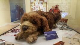 Center for Puppetry Arts - The Storyteller - Dog