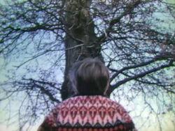 Tree near far
