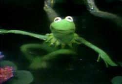 KermitSwimmingTFP
