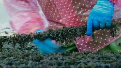 FoodieTruck-Seaweed02