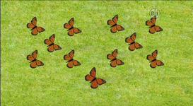 11-Butterflies