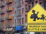 Murray Has a Little Lamb
