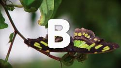 4820-Butterflies