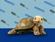 Ewhair-turtle