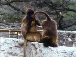 Film.Monkeyscleaning