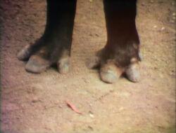 Raposo-Feet