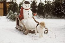 Snowman-jackfrost