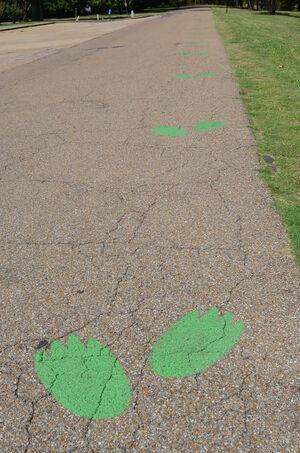 Leland frogprints