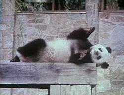 Itchy-Panda