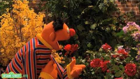 Sesame Street I Wonder