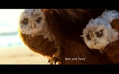 Wild-things-bob&terry