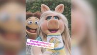 MuppetsNow-S01E01-InstaPig