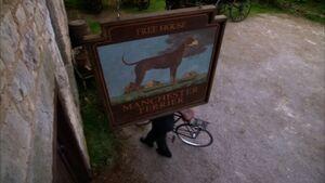 Let loose manchester terrier