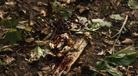 1312 Fox Hunt blood
