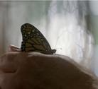 Murdochophobia Butterfly
