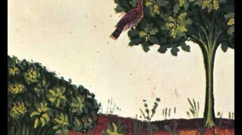 Fenice fu' - Jacopo da Bologna (Ars nova italiana)
