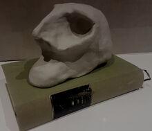 Trial skull