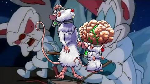 Runt and Cerebro