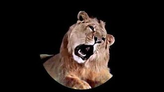 MGM Leo the Lion Video Footage with 2008 Roar