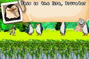 Madagascar - Operation Penguin Madagascar 6
