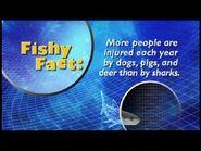 Fishy Facts Shark 2