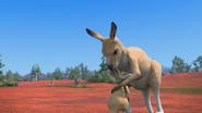 KangarooChristmas96