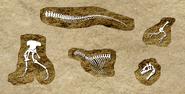DigforDinosaurs10