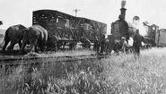 Elephants pushing a derailed train back on the rails
