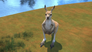 KangarooChristmas81