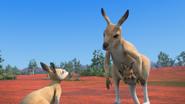 KangarooChristmas95