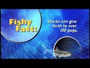 Fishy Facts Shark 3