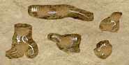 DigforDinosaurs9