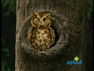 Hoo's in the Forest Hollywoodedge, Single Small Bell Di CRT015002 (1st ding) (2)