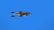 KangarooChristmas47