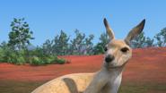 KangarooChristmas91