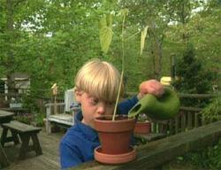 Ewflowers-film