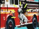 Elmo's World Dogs Quiz 9