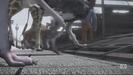Thomas' Animal Ark Hollywoodedge, Elephant Trumpeting PE024801 (2)