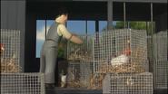 ChickensToSchool18