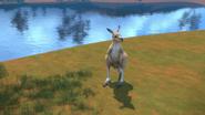 KangarooChristmas80