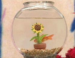 Ewflowers-dorothy