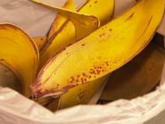 I Spy Bananas 14