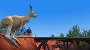 KangarooChristmas46