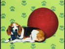 Elmo's World Dogs Quiz 4