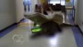 S1e4 alligator